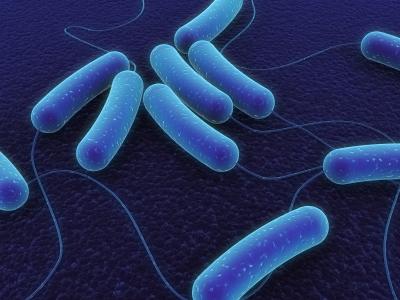 كل ما تريد معرفته عن بكتيريا إي كولاي !!!